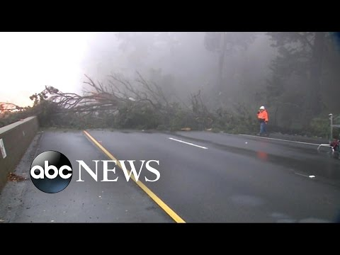 200-Foot Cypress Tree Crashes Down Across Highway in Northern California