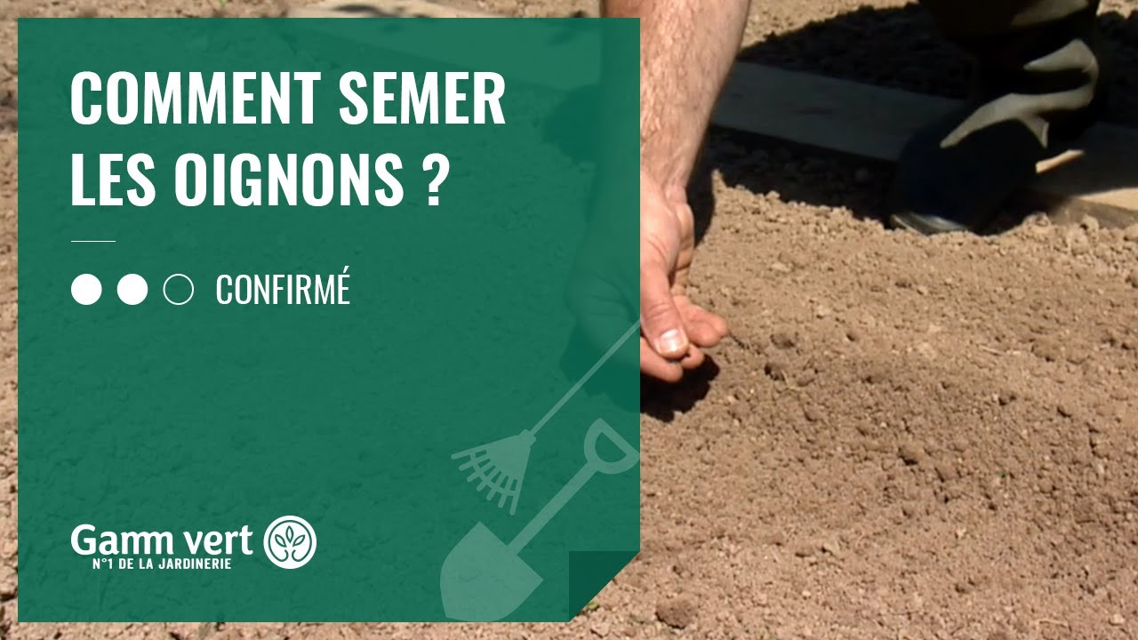 Oignon Blanc A Planter [tuto] comment semer les oignons ? - jardinerie gamm vert