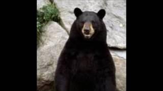 Opie & Anthony: Jim Norton Animal Rants