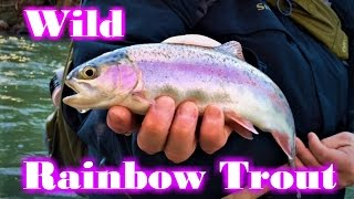 NEW! South Central PA Winter Fly Fishing W/ Tips and Hook-Ups Lively Legz Crew