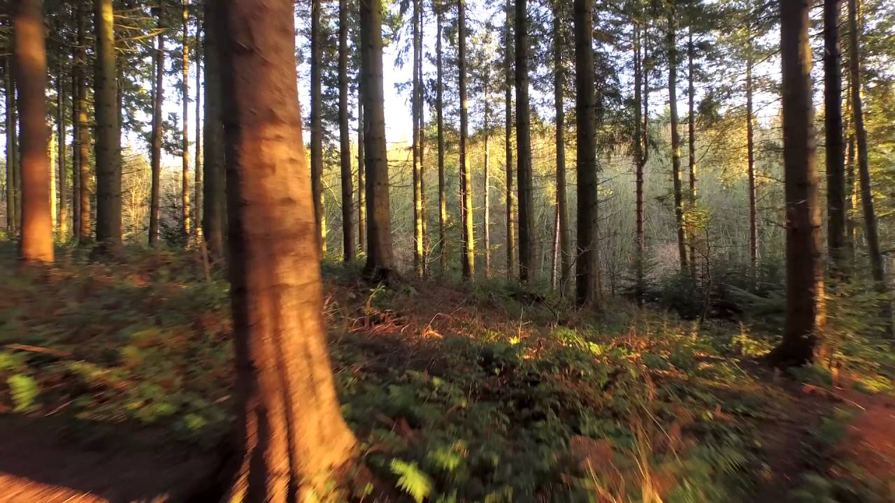 Video Backgrounds Hd Flying Through The Forest Free