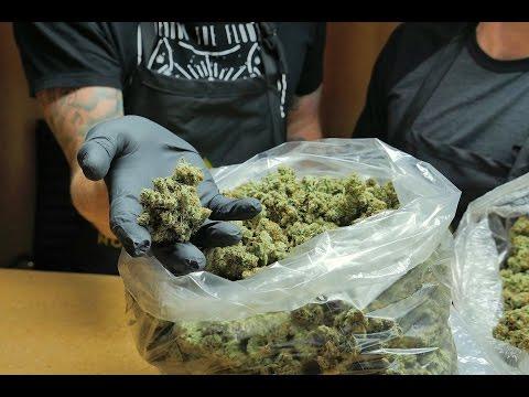 Cannabis at a Crossroads: The Napa of Cannabis I KQED Newsroom