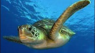 Тайны океана. Подводный мир. Документальный фильм National Geographic. 2018