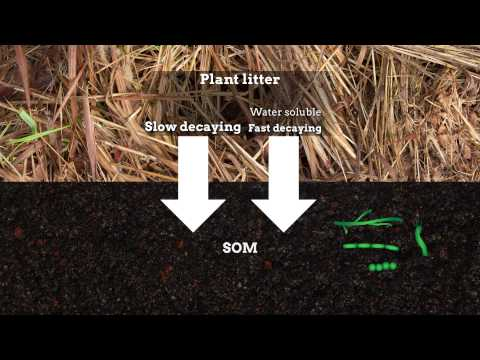 Formation of soil organic matter via biochemical and physical pathways of litter mass loss