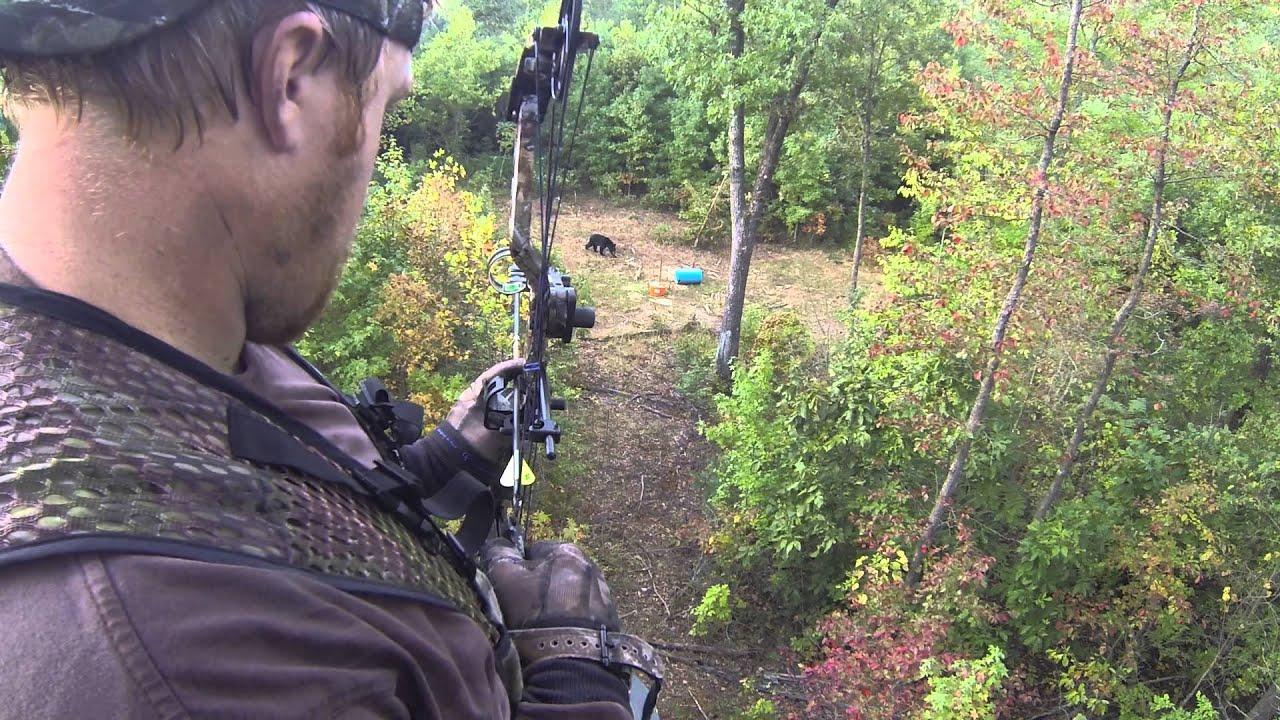 Early season Arkansas Black Bear Bow Hunt. - YouTube