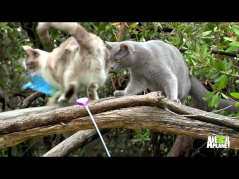 See Why Jackson Thinks These Outdoor Cats Are Better Off Indoors