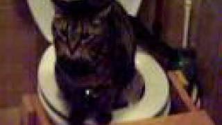 Toilet training Mori the Cat