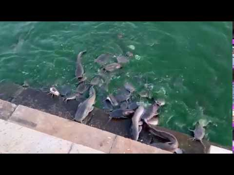 Flying fish in kankariya ahmedabad