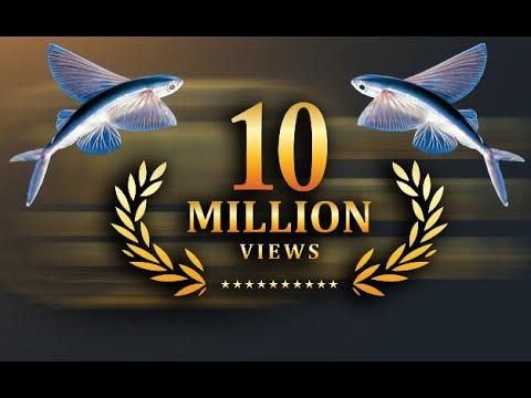 Flying fish in kankariya ahmedabad