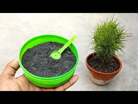 Natural and free fertilizer for any plants | Anti fungal wood ash