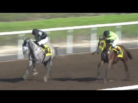 AF TEBYAN - 11 Nov 2016  - Jebel Ali - Race 1