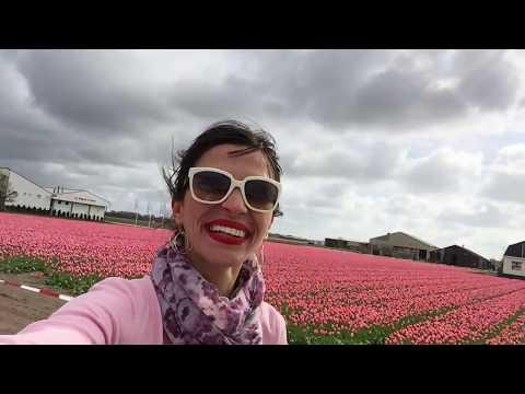 Hollanda Lale Bahçeleri (Holland Tulip Gardens)