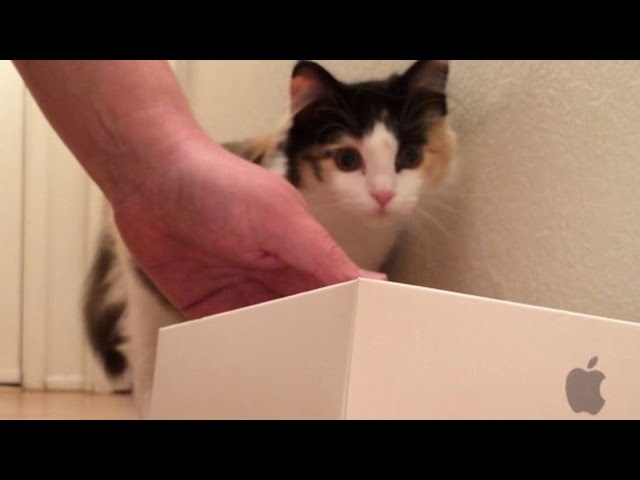 Kichi the Cat's Unboxing and Review: Apple Watch (Parody)