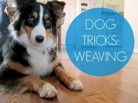 Dog Tricks: Teaching your dog how to weave