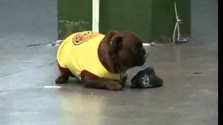 Obedience Small Dogs Training Classes