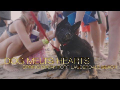 Spring Break 2017 Fort Lauderdale Beach : Service Dog Melts Hearts