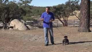 How To Lead A Dog On A Leash