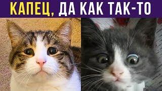Приколы с котами. КАК ТАК-ТО | Мемозг #236