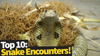 10 Scary & Strange Snake Encounters - NOPE NOPE NOPE!
