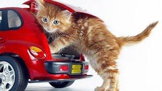 Правила перевозки животных