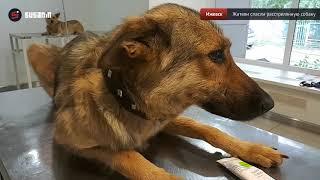 Жители Ижевска спасли расстрелянную неизвестными собаку