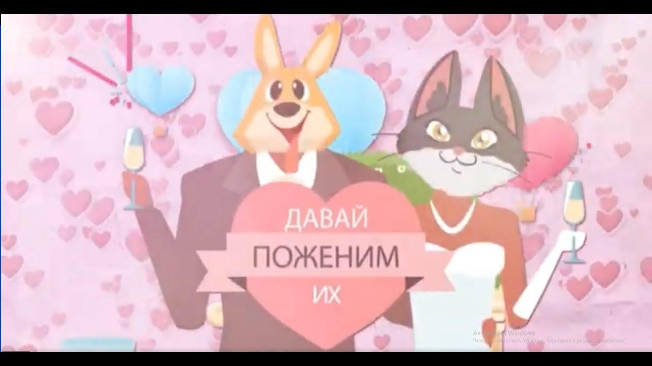 """""""Давай поженим их"""" на ЗооТВ с хаски"""