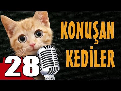 Konuşan Kediler 28