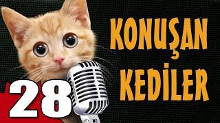Konuşan Kediler 28 - En Komik Kedi Videoları
