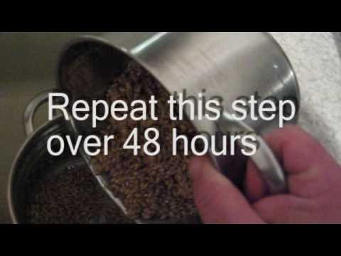 how-to-make-malted-barley