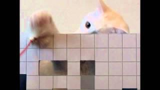 CATTOY ARCH(キャットトイ アルク)(アルクとはアーキテクチャーの略...