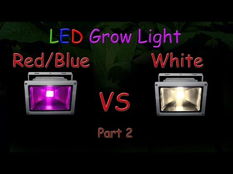 White LED vs Red/Blue LED Grow light Grow Test - Part 2 (The Grow Results!)