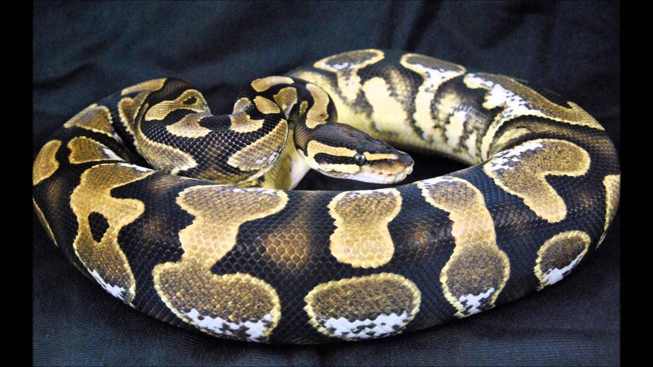 amazing hd snake photos youtube