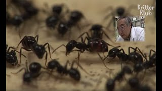 Meet The Man Who Can Communicate With Ants | Kritter Klub