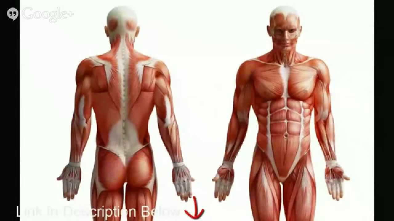 Human Anatomy Quiz Help Study Guide For Human Anatomy Quiz Youtube