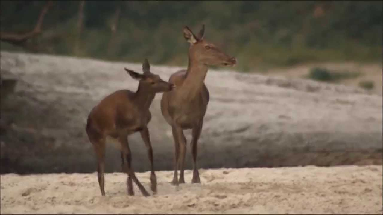 Image result for dancing deer