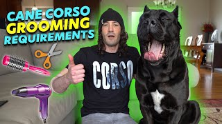 Cane Corso Grooming Requirements