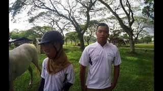 SMBQ 1033 Farm & Stable Management (Handling & Leading)