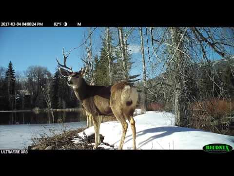 Colorado - Deer Friendly