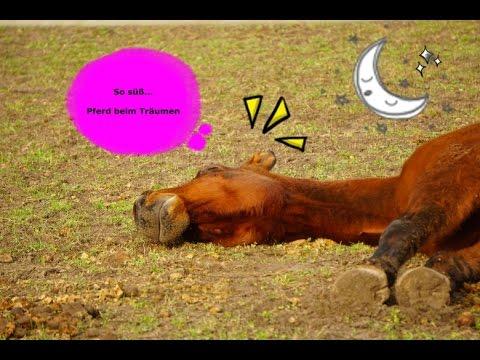 so s wie pferde tr umen youtube