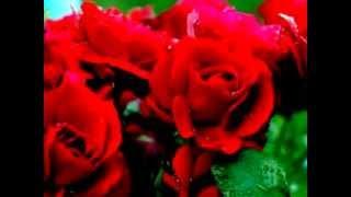 Миллион алых роз. Remix.