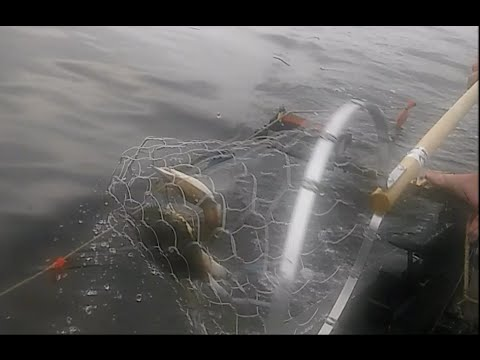 Maryland Crabbing – Trot Line – Commercial