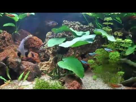 Eladó 200l akvárium