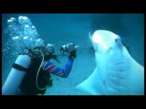 Amazing Devilfish Video