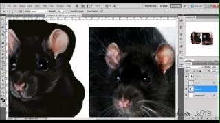 Rat realism ● Quick Speedpaint