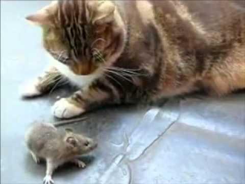 Mèo và Chuột