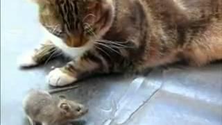 Phim Hoat Hinh | Mèo và Chuột | Meo va Chuot
