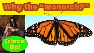 """Monarch Q & A: Why are the they """"monarch,"""" the king/queen of butterflies?"""