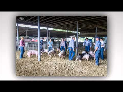 Fillmore School Farm Showmanship Day