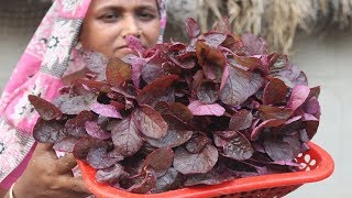 Farm Fresh Lal Shak Vaji Recipe Healthy Cooking Red Spinach Fry Red Amaranth Recipe Village Food