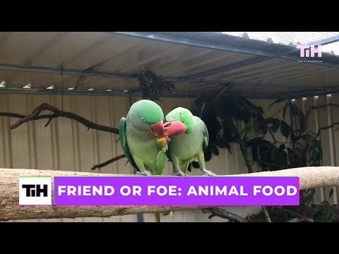 Friend or Foe: Animal Food